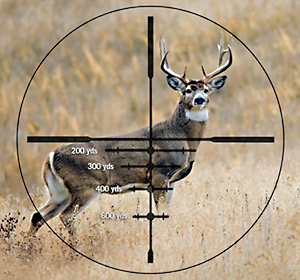varmint scope